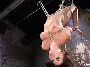 hogtied and dangled babe poon toyed